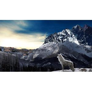 フリー写真, フォトレタッチ, 動物, 哺乳類, 狼(オオカミ), ホッキョクオオカミ, 山