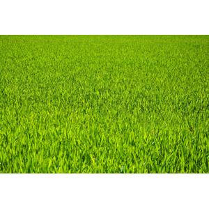 フリー写真, 植物, 雑草, 緑色(グリーン), 牧草地