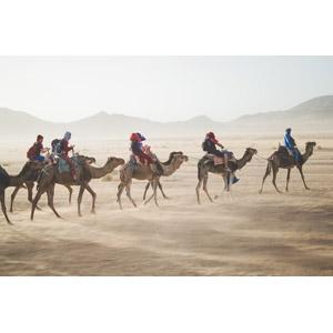 フリー写真, 人と風景, 人と動物, 砂漠, サハラ砂漠, モロッコの風景, 動物, 哺乳類, ラクダ, 集団(グループ)