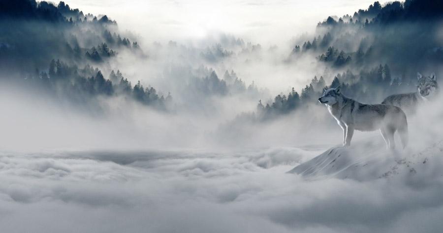 フリー写真 雲海と二匹の狼