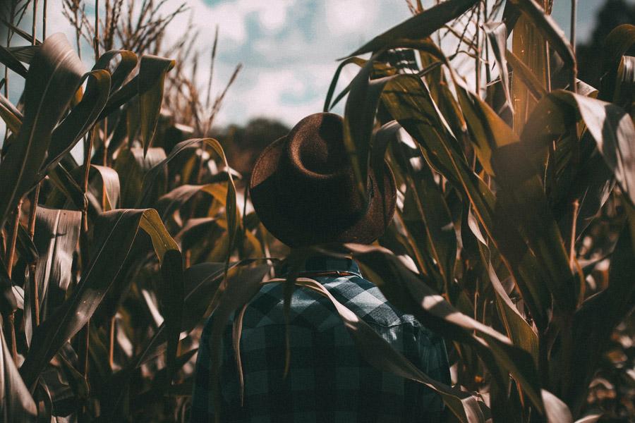 フリー写真 とうもろこし畑の中の男性