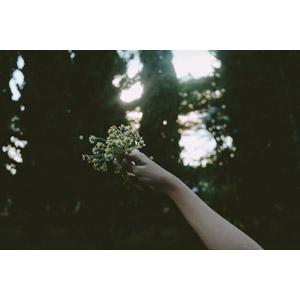 フリー写真, 人体, 手, 花, 人と花, 白色の花
