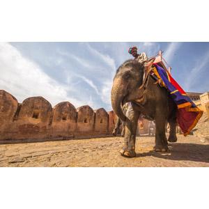 フリー写真, 動物, 哺乳類, 象(ゾウ), 人と動物, アンベール城, 世界遺産, インドの風景