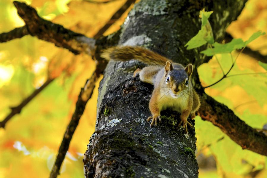 フリー写真 木の上から見下ろすリス