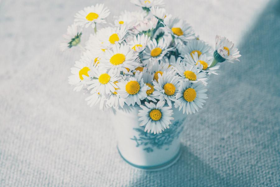 フリー写真 花瓶の中のヒナギクの花