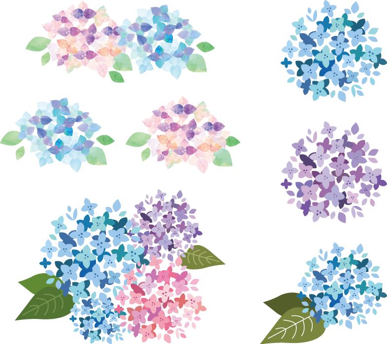 フリーイラスト 7種類の紫陽花の花のセット