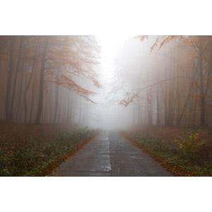 フリー写真, 風景, 小道, 霧(霞), 森林, 樹木