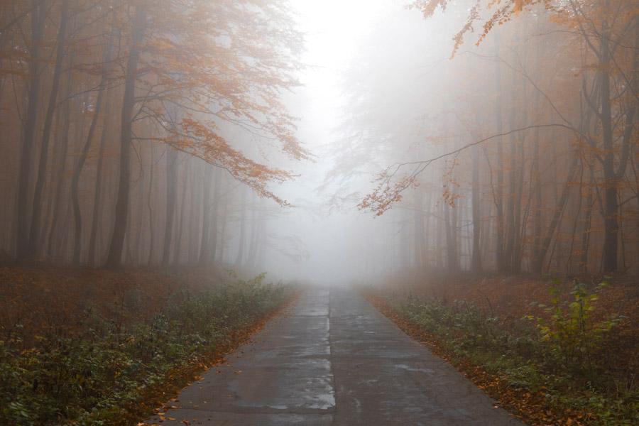 フリー写真 霧に包まれた小道の風景