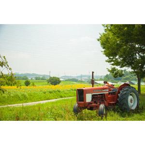 フリー写真, 風景, 田舎, 花畑, 向日葵(ヒマワリ), トラクター, 農業機械, 日本の風景