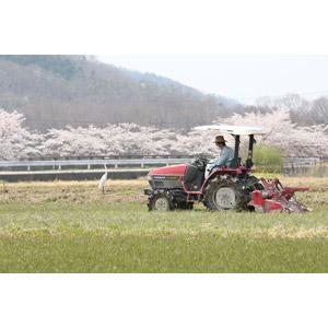 フリー写真, 風景, 職業, 仕事, 農家(農民), トラクター, 農業機械, 日本の風景, 畑, 桜(サクラ), 鷺(サギ), 田舎, 春, 人と動物, 農業, 耕作