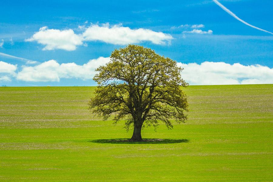 フリー写真 青空と牧草地の木の風景