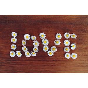 フリー写真, 背景, 植物, 花, ヒナギク(デージー), 白色の花, 愛(ラブ)