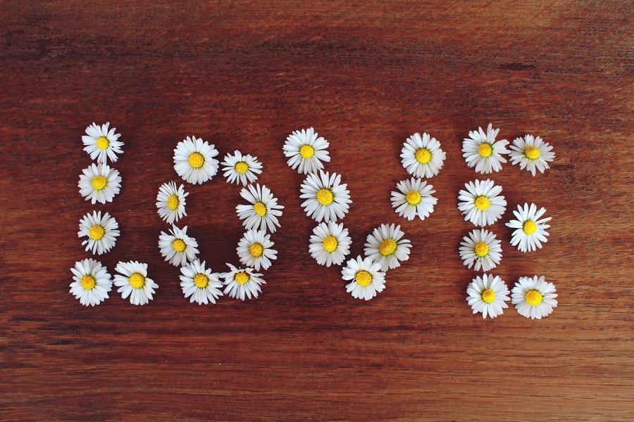 フリー写真 ヒナギクの花で作った「LOVE」