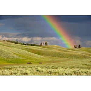 フリー写真, 風景, 自然, 丘, 虹, イエローストーン国立公園, 世界遺産, アメリカの風景