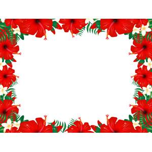 フリーイラスト, ベクター画像, AI, 背景, フレーム, 囲みフレーム, 植物, 花, ハイビスカス, 赤色の花, プルメリア