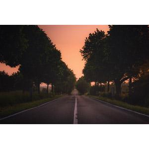 フリー写真, 風景, 道路, 並木道, 樹木, 夕暮れ(夕方), 夕焼け, ドイツの風景
