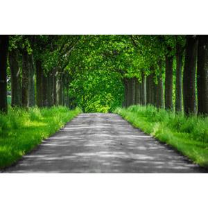 フリー写真, 風景, 小道, 並木道, 樹木, 新緑