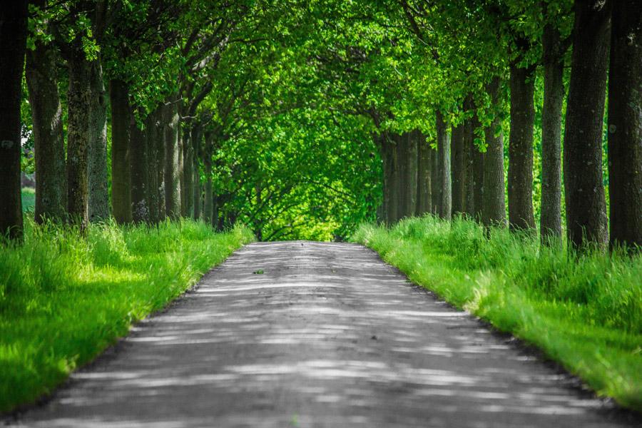 フリー写真 緑色の並木道の風景