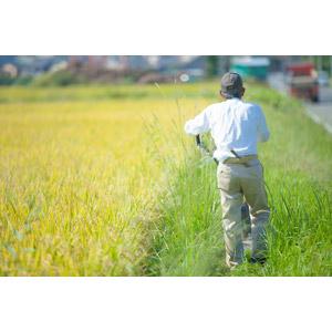 フリー写真, 人物, 老人, シニア男性, 祖父(おじいさん), 農家(農民), 農業, 水田(田んぼ), 稲(イネ), 穀物, 作物, 後ろ姿