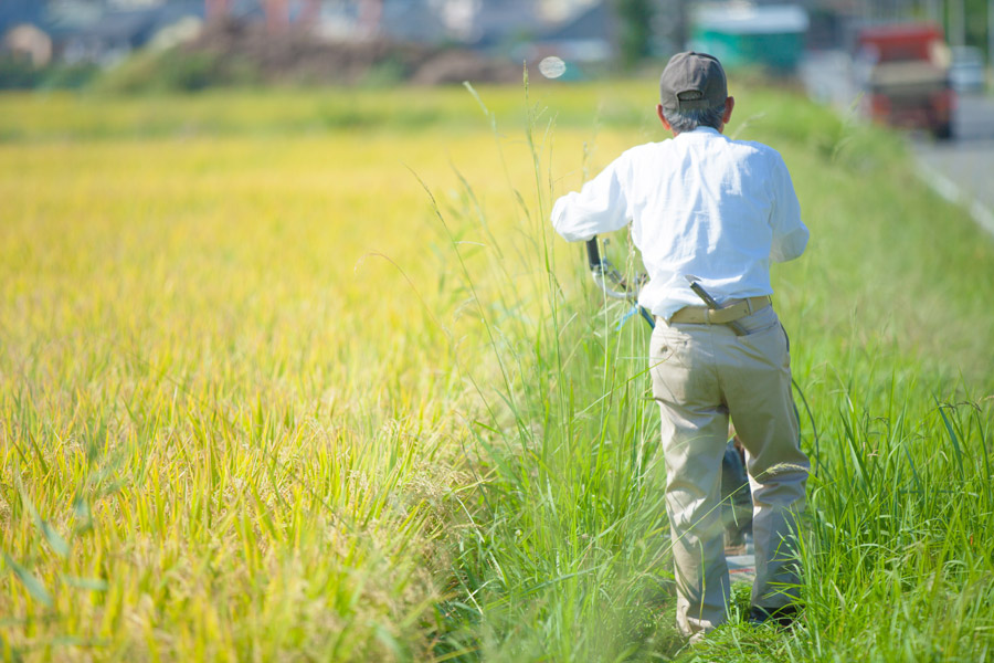 フリー写真 田んぼで農作業中のおじいさん