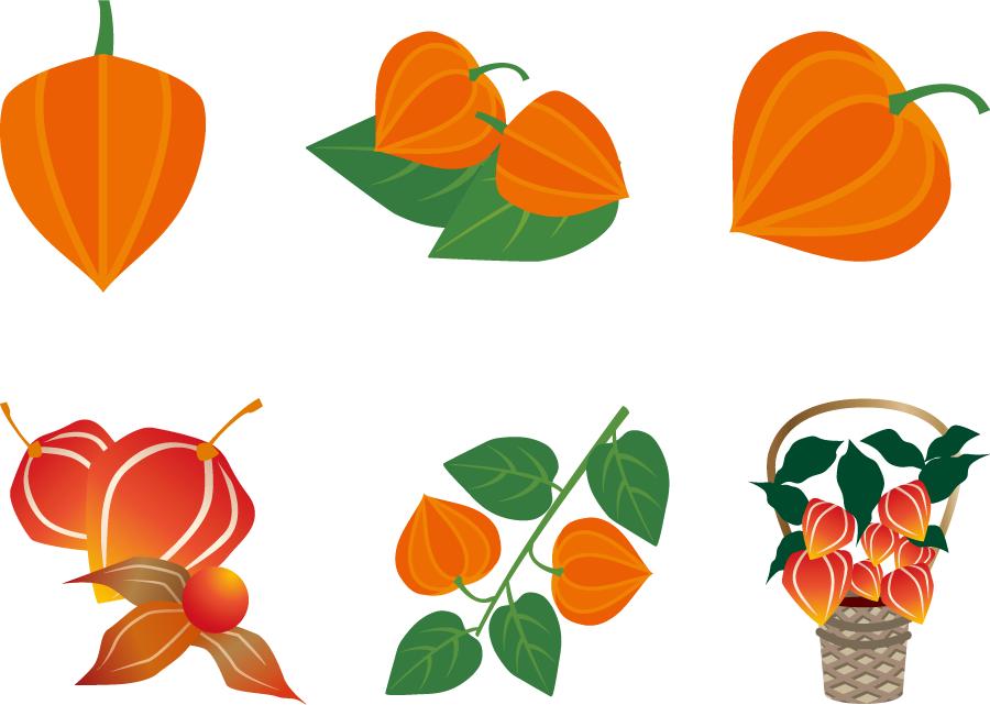 フリーイラスト 6種類のホオズキのセット