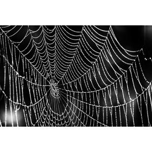 フリー写真, 背景, 水滴(雫), 蜘蛛の巣(クモの巣)
