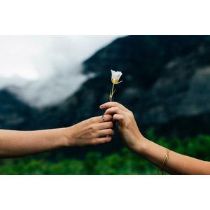 フリー写真, 人体, 手, プレゼント, 人と花, 花, 白色の花