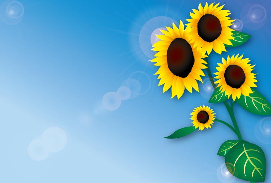 フリーイラスト ひまわりの花と青空