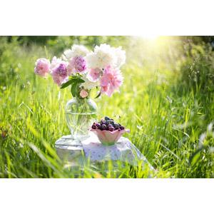 フリー写真, 風景, 草むら, 植物, 雑草, 花, 花瓶, 食べ物(食料), 果物(フルーツ), さくらんぼ(サクランボ), 太陽光(日光)
