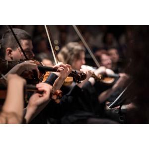 フリー写真, 人物, 集団(グループ), 音楽, 楽器, 弦楽器, バイオリン(ヴァイオリン), 演奏する, バイオリニスト, ライブ(コンサート)