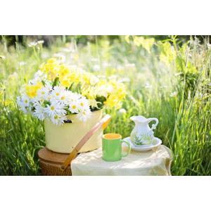 フリー写真, 植物, 草むら, 花, ヒナギク(デージー), マグカップ, ピッチャー(水差し)
