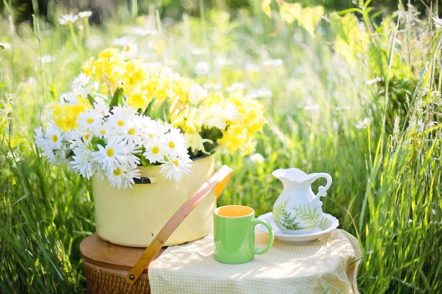 フリー写真 草むらに置かれたヒナギクの花とマグカップとピッチャー