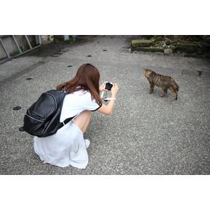 フリー写真, 人物, 女性, アジア人女性, 人と動物, 猫(ネコ), キジトラ猫, 写真撮影, カメラ, しゃがむ, リュックサック(ナップサック)