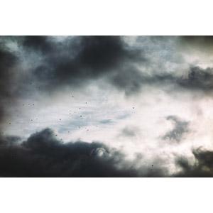フリー写真, 風景, 自然, 空, 雲, 暗雲, 鳥(トリ)