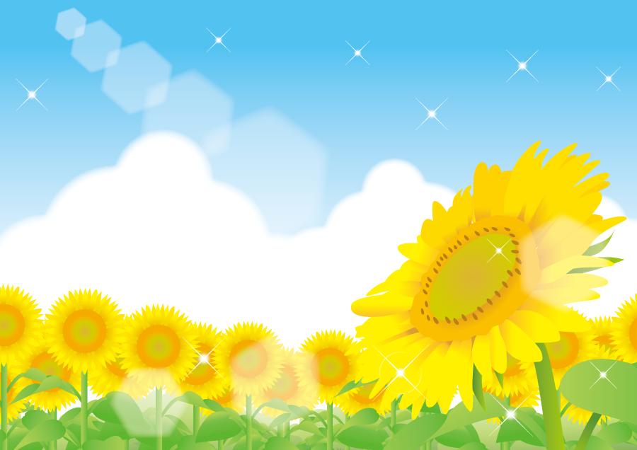 フリーイラスト ひまわり畑と夏空の風景