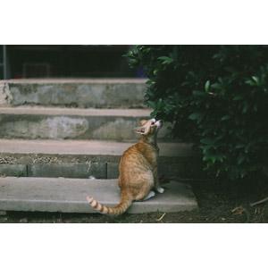 フリー写真, 動物, 哺乳類, 猫(ネコ), 匂いを嗅ぐ(動物)