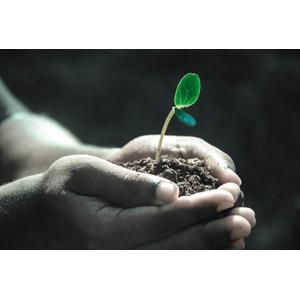 フリー写真, 人体, 手, 土, 植物, 新芽