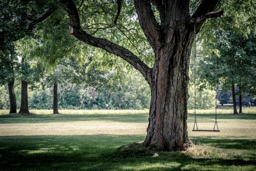 フリー写真 木の枝に吊り下げられたブランコ