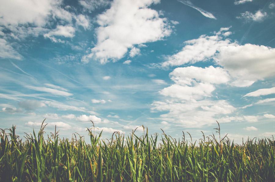 フリー写真 畑の作物と雲と空の風景