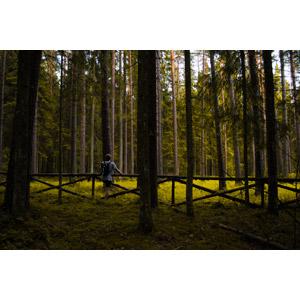 フリー写真, 人物, 男性, 後ろ姿, 人と風景, 森林, 樹木, 眺める, 柵(フェンス)