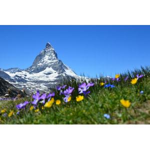 フリー写真, 風景, 自然, 山, 青空, マッターホルン, アルプス山脈, スイスの風景, 花