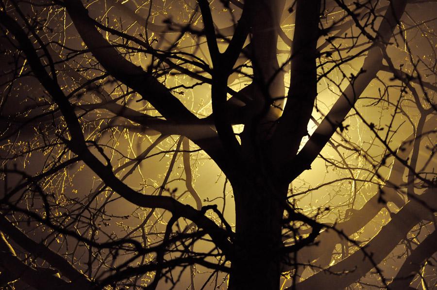 フリー写真 光と木
