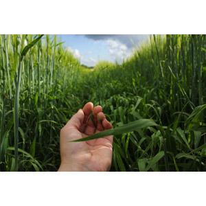 フリー写真, 人体, 手, 人と風景, 畑, 作物