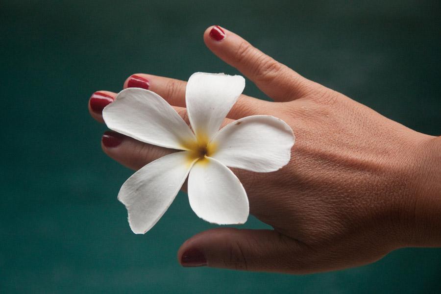 フリー写真 手とプルメリアの花