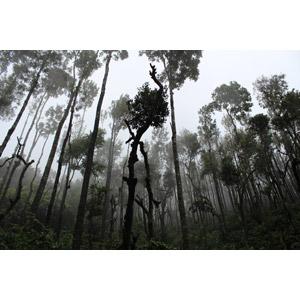 フリー写真, 風景, 自然, 森林, 熱帯雨林(ジャングル), 霧(霞), インドの風景