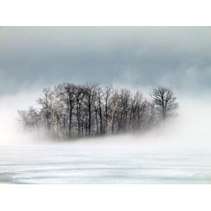 フリー写真, 風景, 自然, 樹木, 霧(霞), 朝, 冬