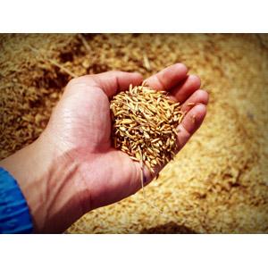 フリー写真, 食べ物(食料), 穀物, お米, 人体, 手