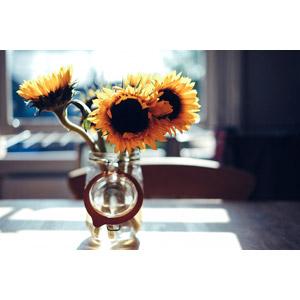 フリー写真, 植物, 花, 向日葵(ヒマワリ), 黄色の花, 夏, 花瓶