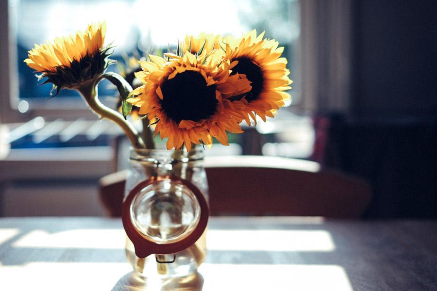 フリー写真 花瓶に生けられたひまわりの花