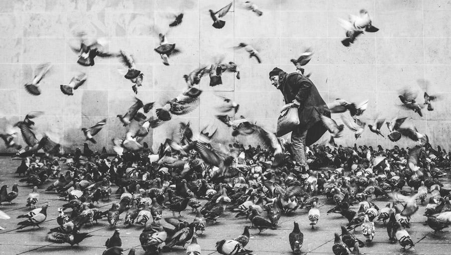 フリー写真 鳩の群れと餌を撒くおじいさん